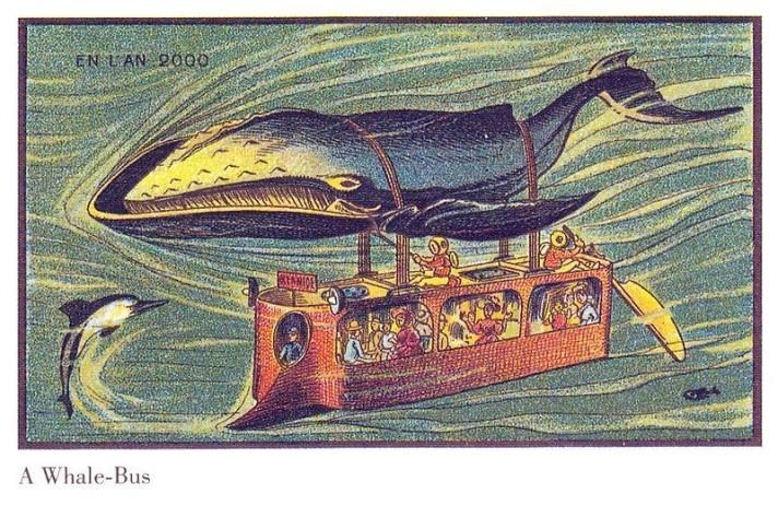 whalebus